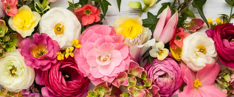 Blumenlexikon - Blumen von A bis Z