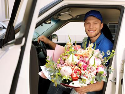 Haustierfreundliche Pflanzen bestellen