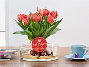 Tulpenstrauß mit Zwiebeln: das Bulb Bouquet