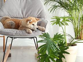 Acht haustierfreundliche Zimmerpflanzen