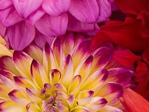 Welche Blumen blühen im August?