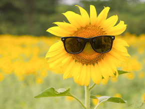 Blumenversand im Sommer
