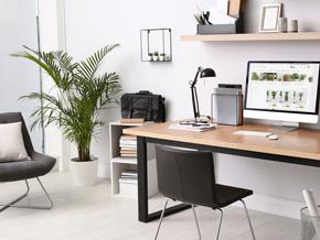 Pflanzen für dein Home-Office