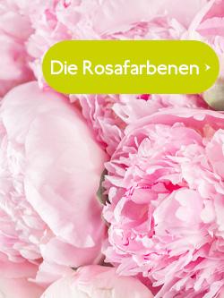 Rosa Pfingstrosen bestellen
