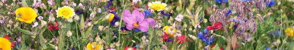 Wildblumen bestellen
