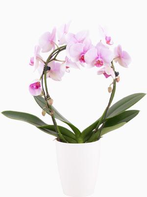 Pflanzen zum Muttertag