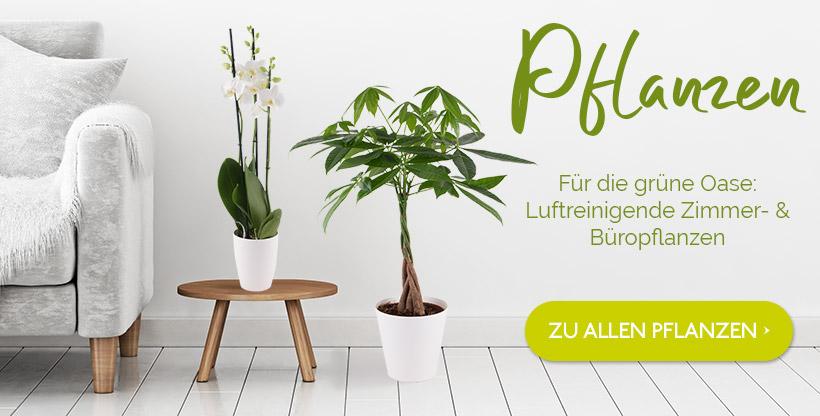 Pflanzen verschicken
