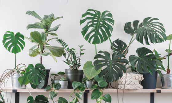 Pflegeleichte Pflanzen bestellen
